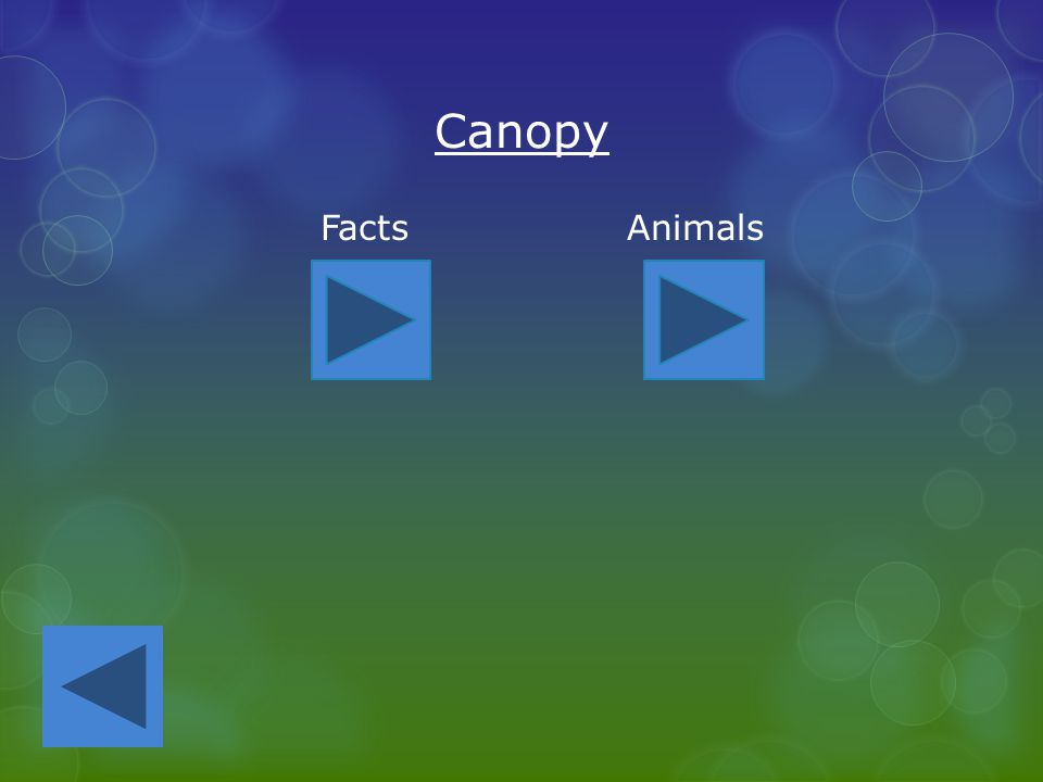 23 Canopy Facts Animals  sc 1 st  SlidePlayer & Layers of the Rainforest - ppt video online download