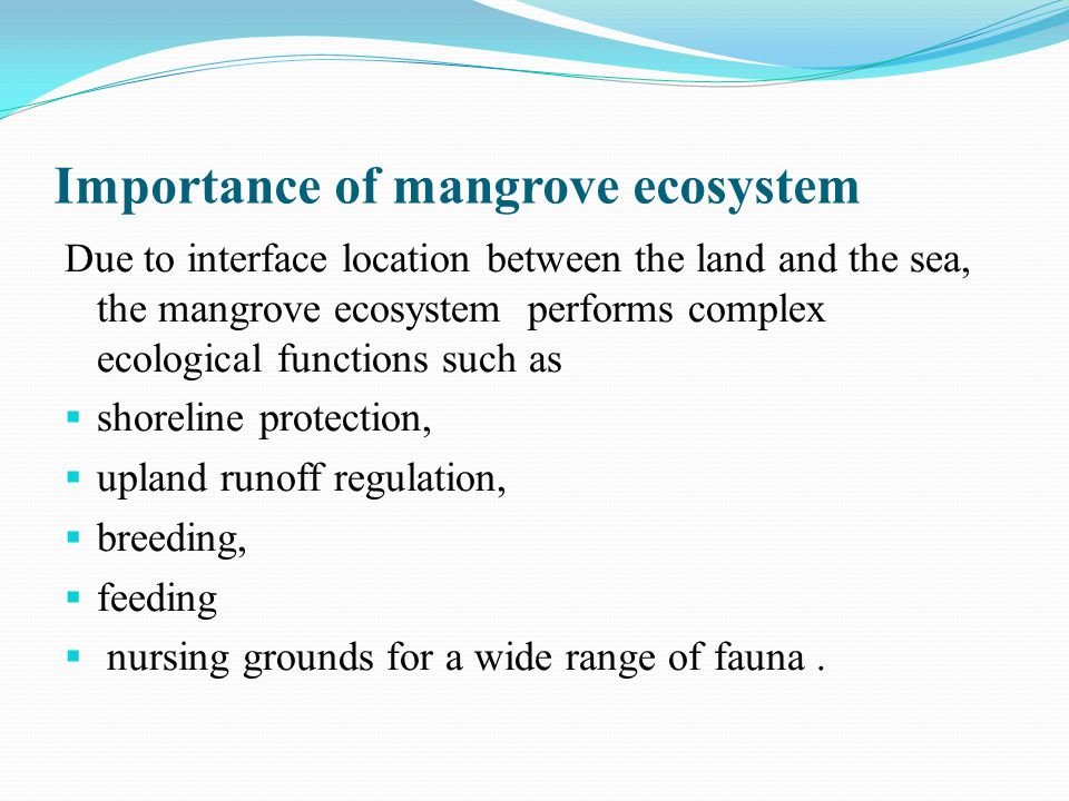 mangrove swamps importance essay Mangrove analysis report essay mangrove swamps used to be it is important that the new generation learns about the fragility and importance of mangroves.