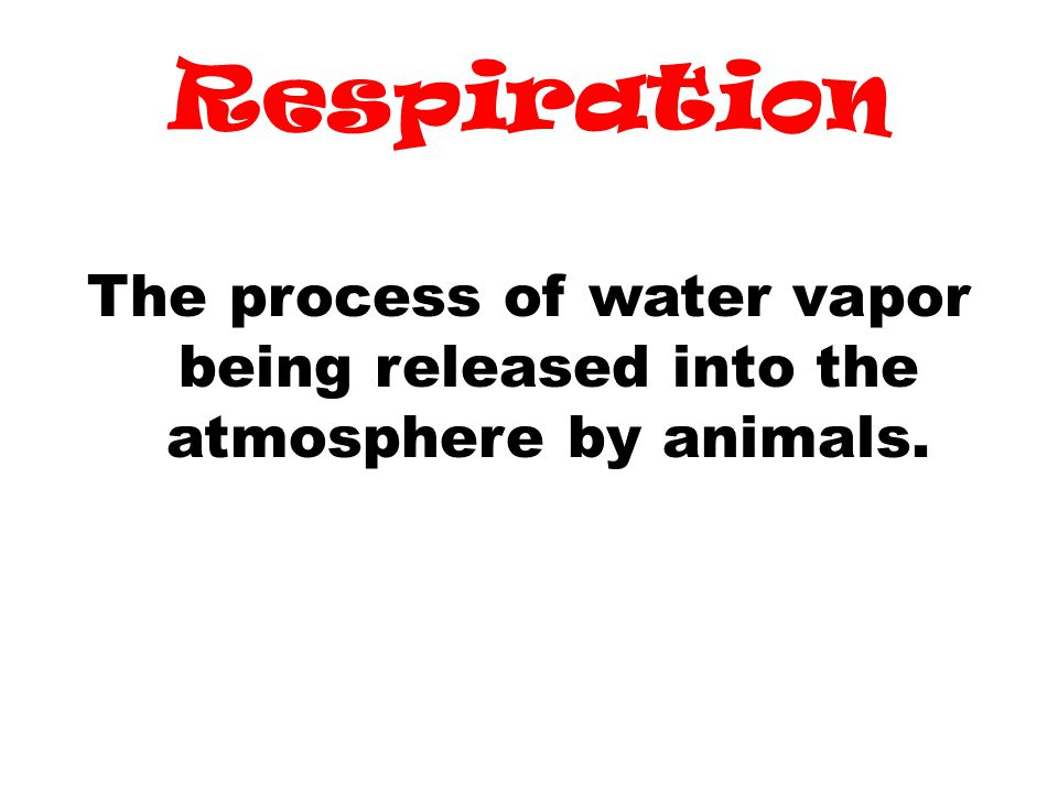 Respiration The process of water vapor being released into the atmosphere by animals.