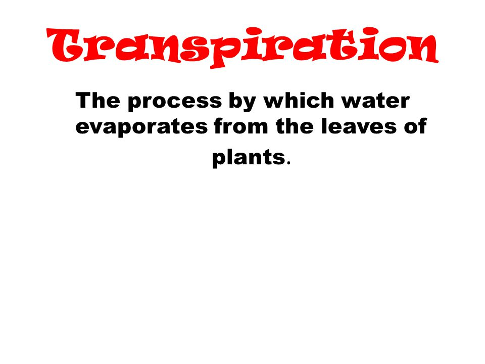The process by which water evaporates from the leaves of plants.