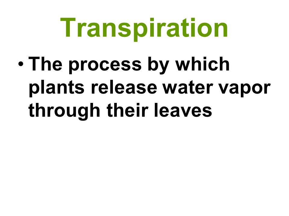 Transpiration The process by which plants release water vapor through their leaves