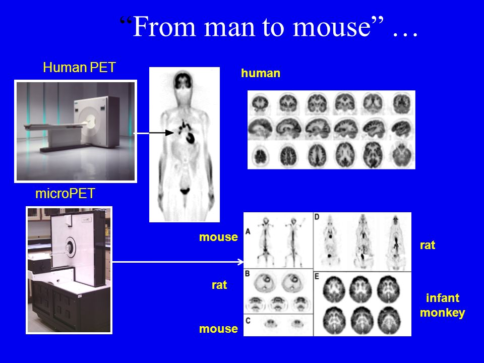 From man to mouse … Human PET microPET human mouse rat rat infant