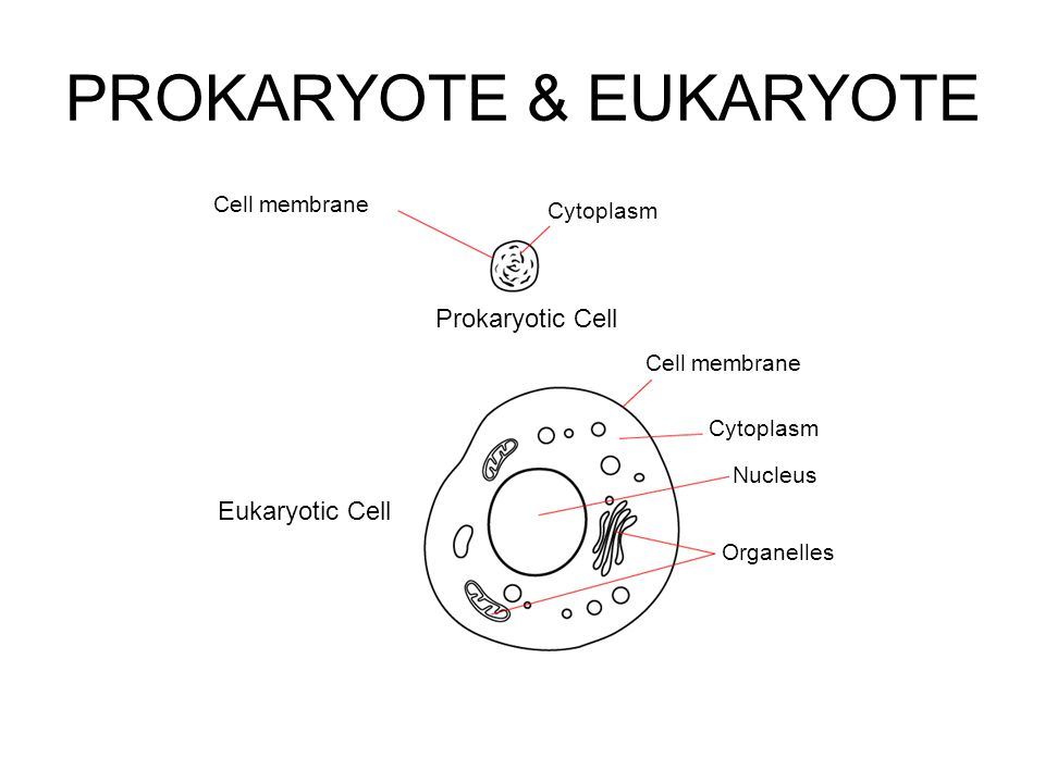 cell theory types of cells organelles