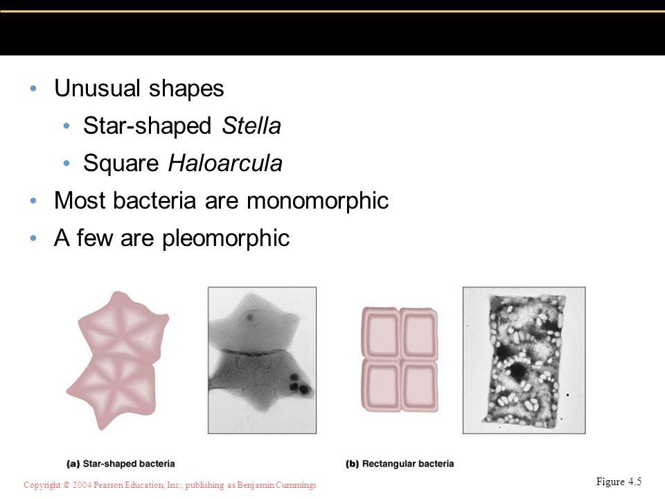 Most bacteria are monomorphic A few are pleomorphic