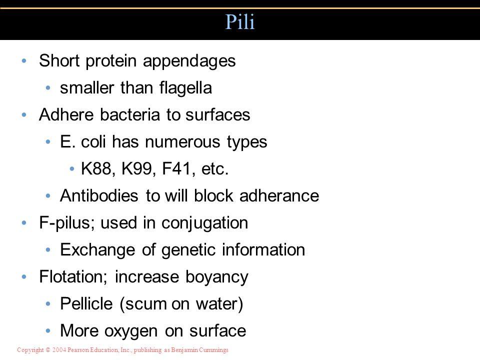 Pili Short protein appendages smaller than flagella