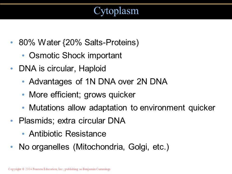 Cytoplasm 80% Water {20% Salts-Proteins) Osmotic Shock important