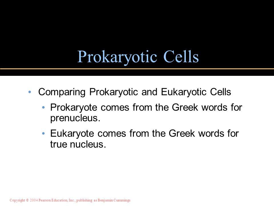Prokaryotic Cells Comparing Prokaryotic and Eukaryotic Cells