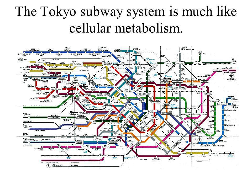 The Tokyo subway system is much like cellular metabolism.
