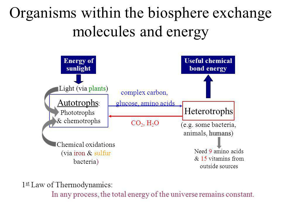 Organisms within the biosphere exchange molecules and energy