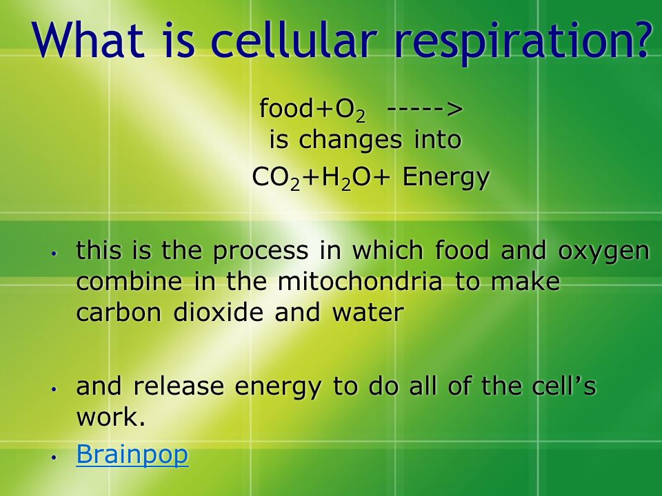 What Is Cellular Respiration on Mitochondria Cell Structure