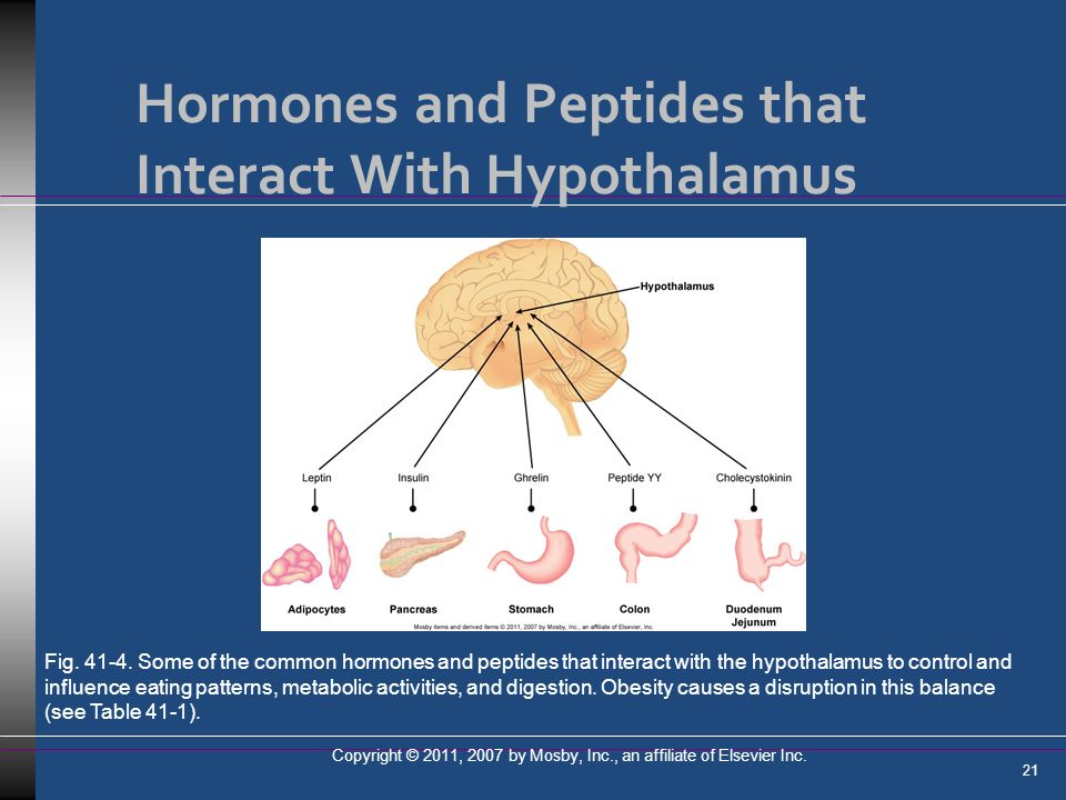 Hormones and Peptides that Interact With Hypothalamus