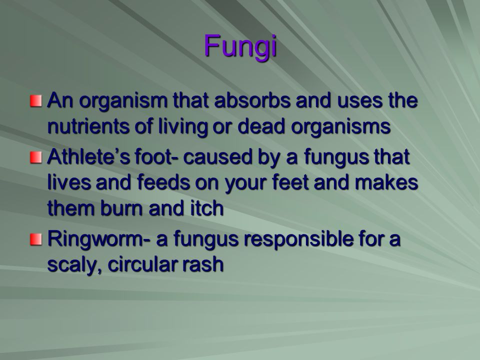 Fungi An organism that absorbs and uses the nutrients of living or dead organisms.