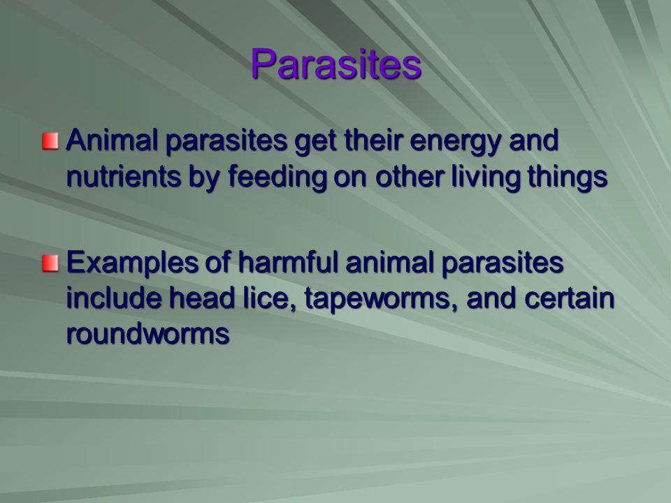 Parasites Animal parasites get their energy and nutrients by feeding on other living things.