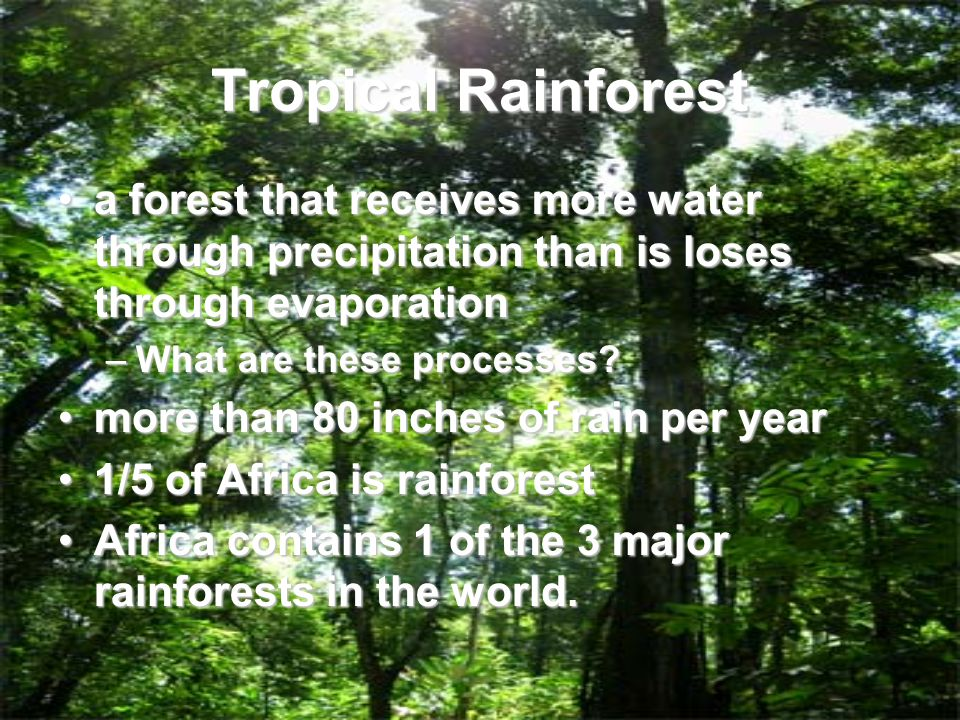 What are the major geographical features of africa ppt video tropical rainforest a forest that receives more water through precipitation than is loses through evaporation sciox Image collections