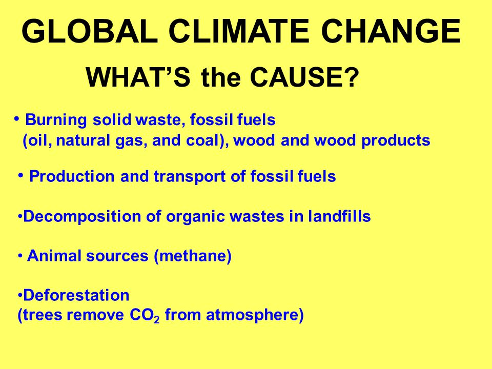 GLOBAL CLIMATE CHANGE WHAT'S the CAUSE
