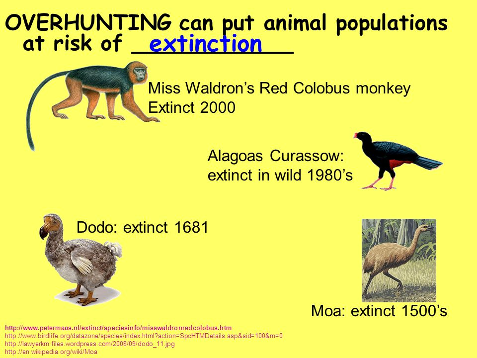 OVERHUNTING can put animal populations at risk of ____________