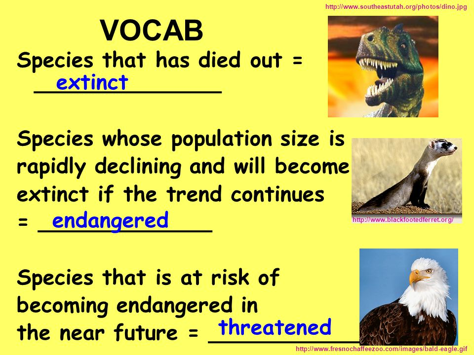 VOCAB Species that has died out = ______________ extinct