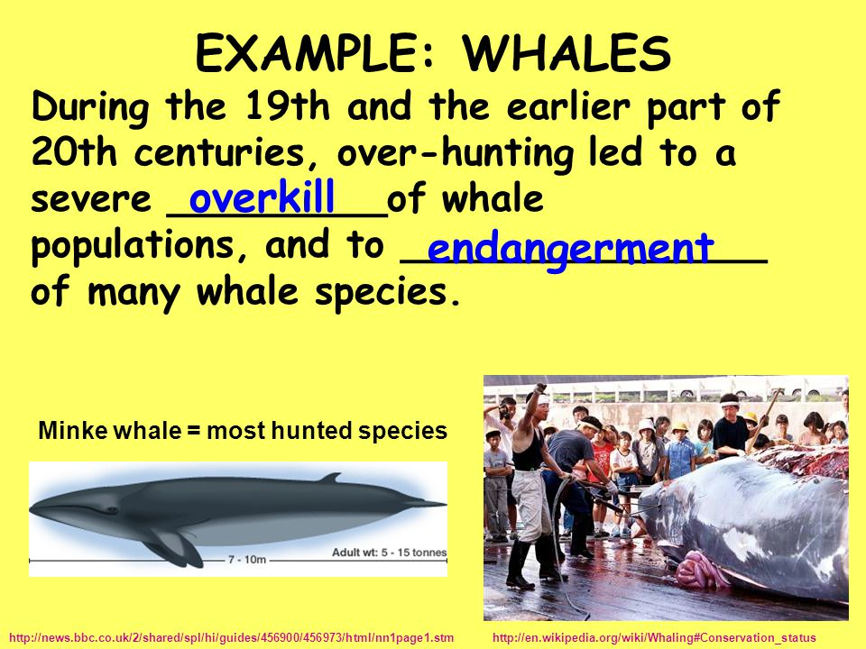 EXAMPLE: WHALES overkill endangerment