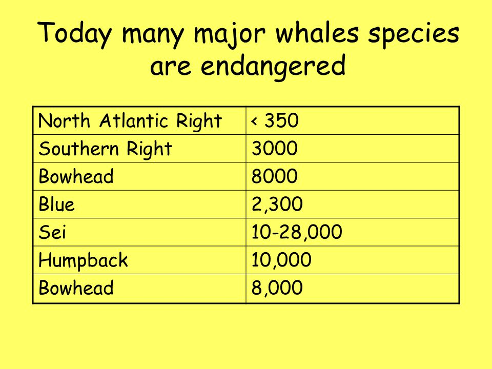 Today many major whales species are endangered