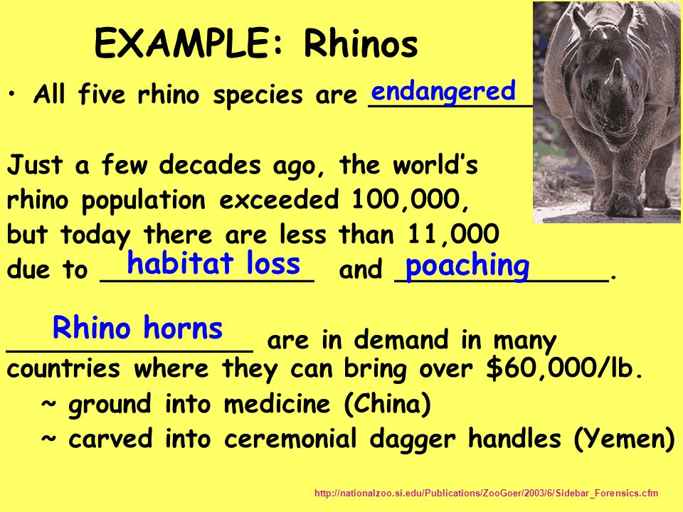 EXAMPLE: Rhinos habitat loss poaching Rhino horns endangered