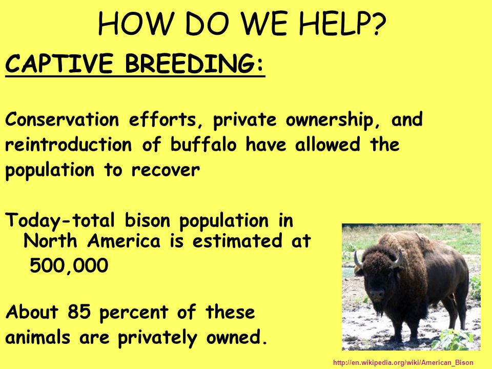 HOW DO WE HELP CAPTIVE BREEDING: