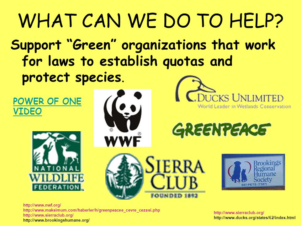 WHAT CAN WE DO TO HELP Support Green organizations that work for laws to establish quotas and protect species.
