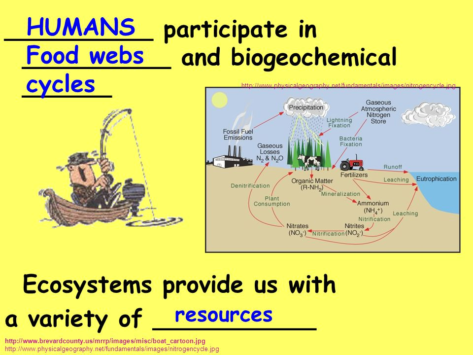 __________ participate in __________ and biogeochemical ______