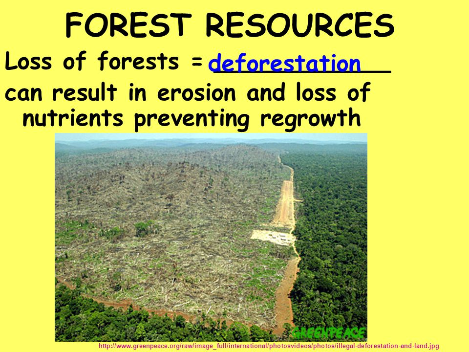 Loss of forests = ____________