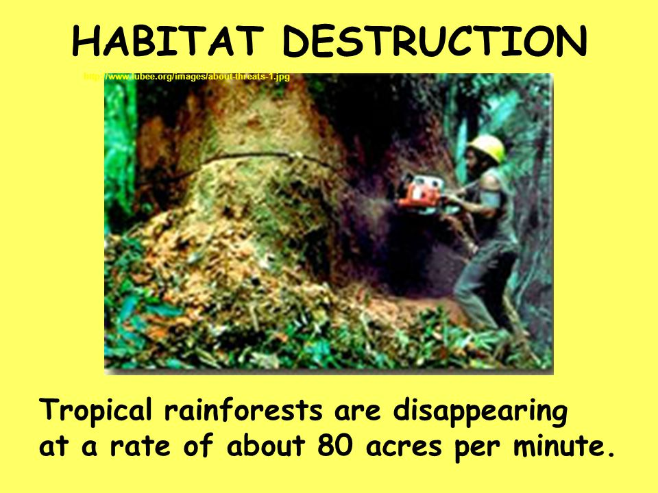 HABITAT DESTRUCTION Tropical rainforests are disappearing