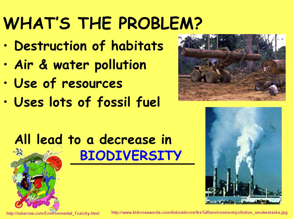 WHAT'S THE PROBLEM Destruction of habitats Air & water pollution