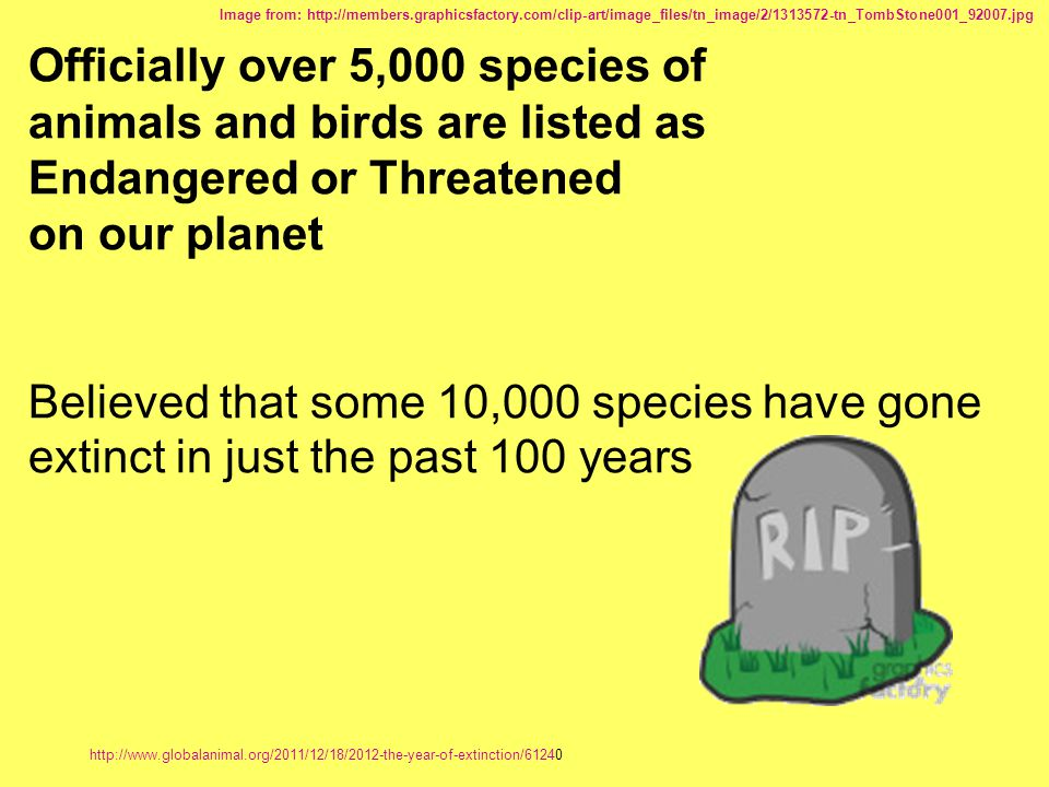 Officially over 5,000 species of
