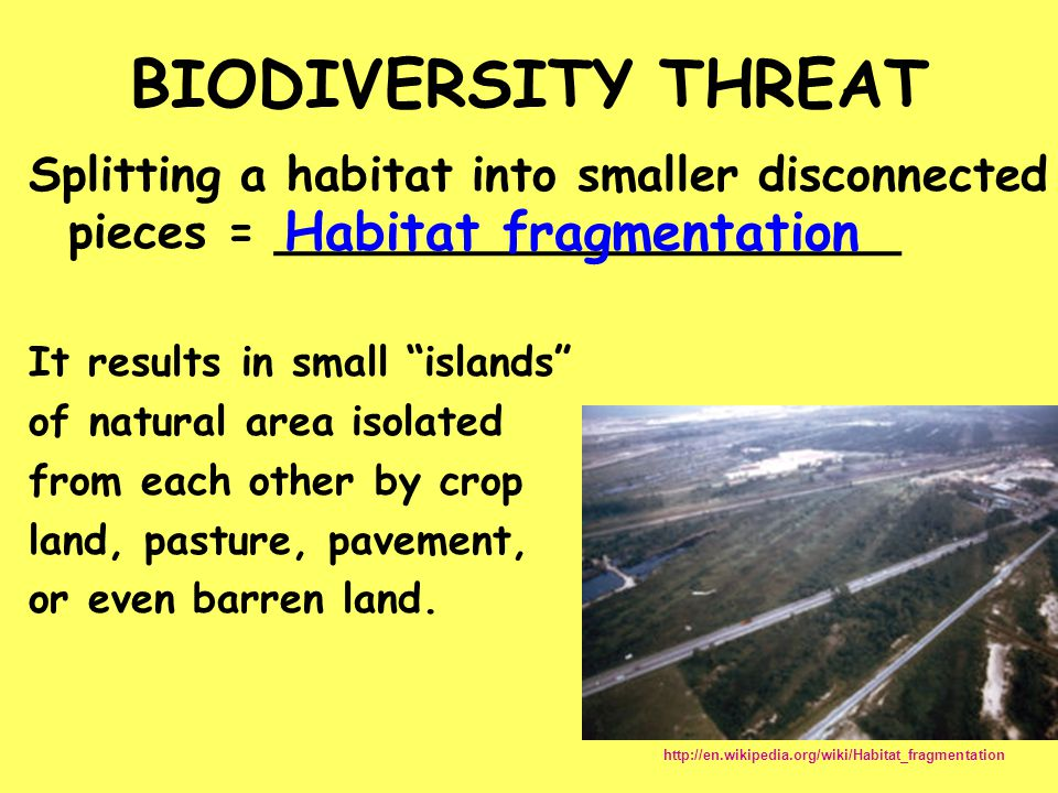 BIODIVERSITY THREAT Habitat fragmentation