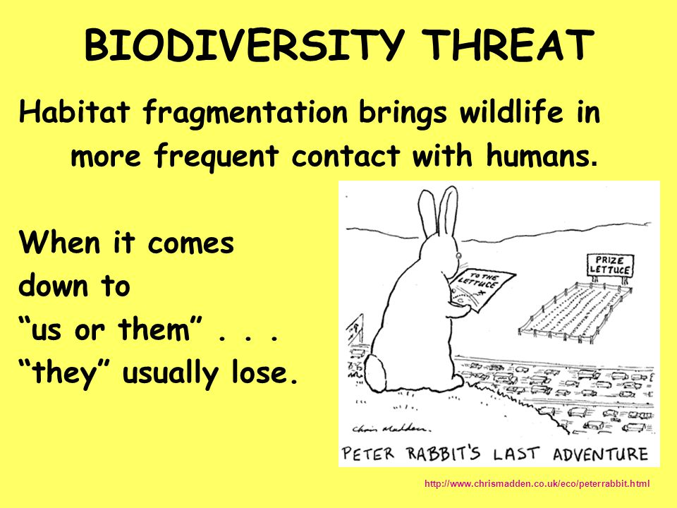 BIODIVERSITY THREAT Habitat fragmentation brings wildlife in