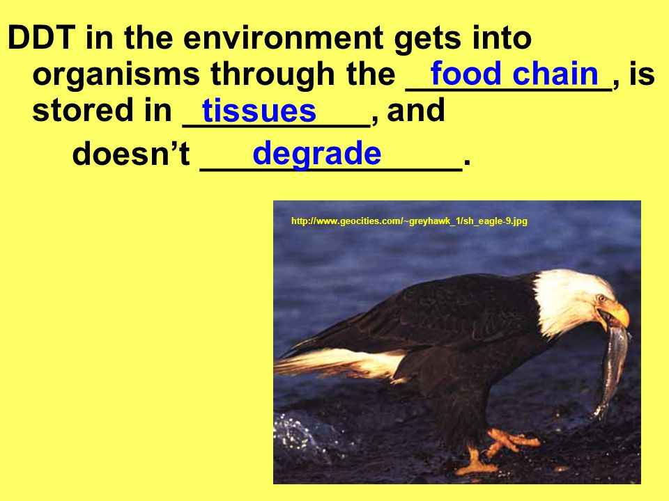 doesn't ______________. food chain tissues degrade