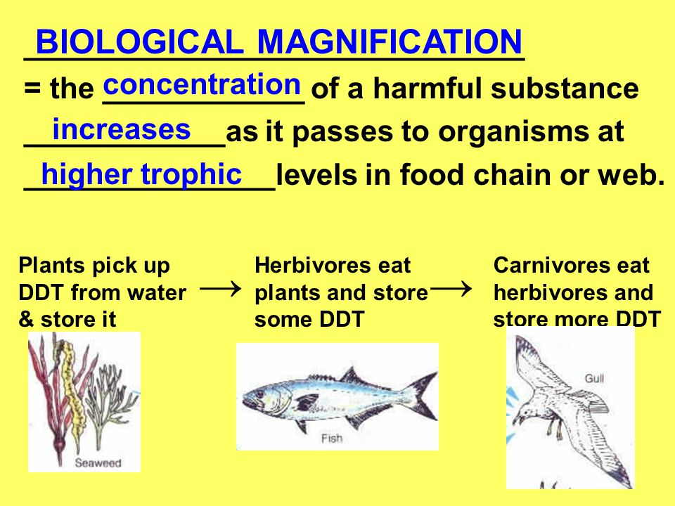 → → BIOLOGICAL MAGNIFICATION ______________________________