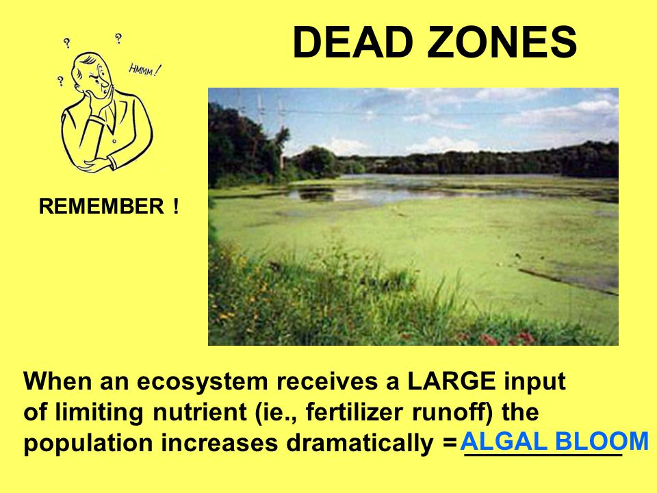 DEAD ZONES When an ecosystem receives a LARGE input