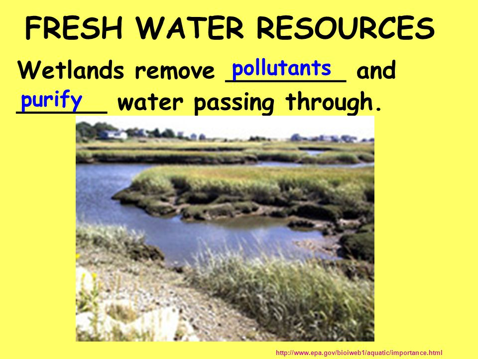 FRESH WATER RESOURCES Wetlands remove ________ and