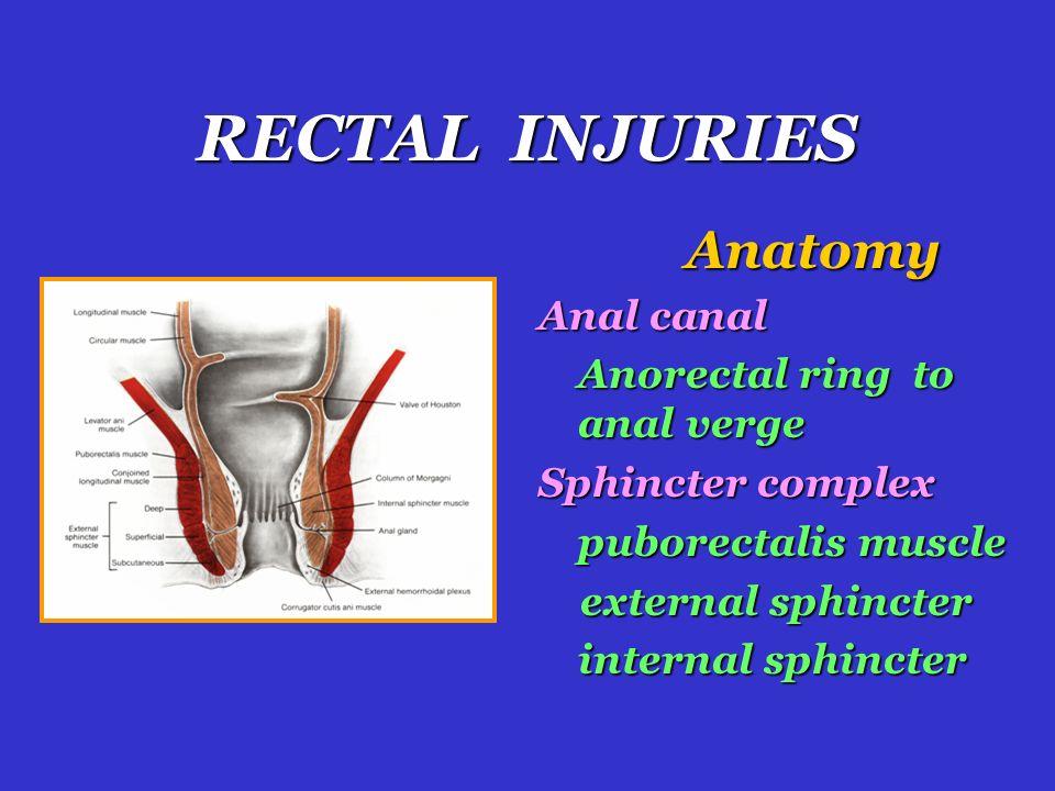 External anal sphincter - Wikipedia