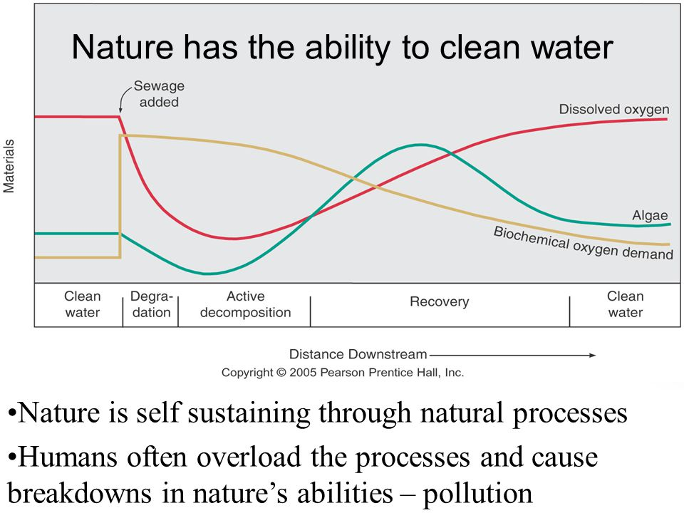 Nature has the ability to clean water