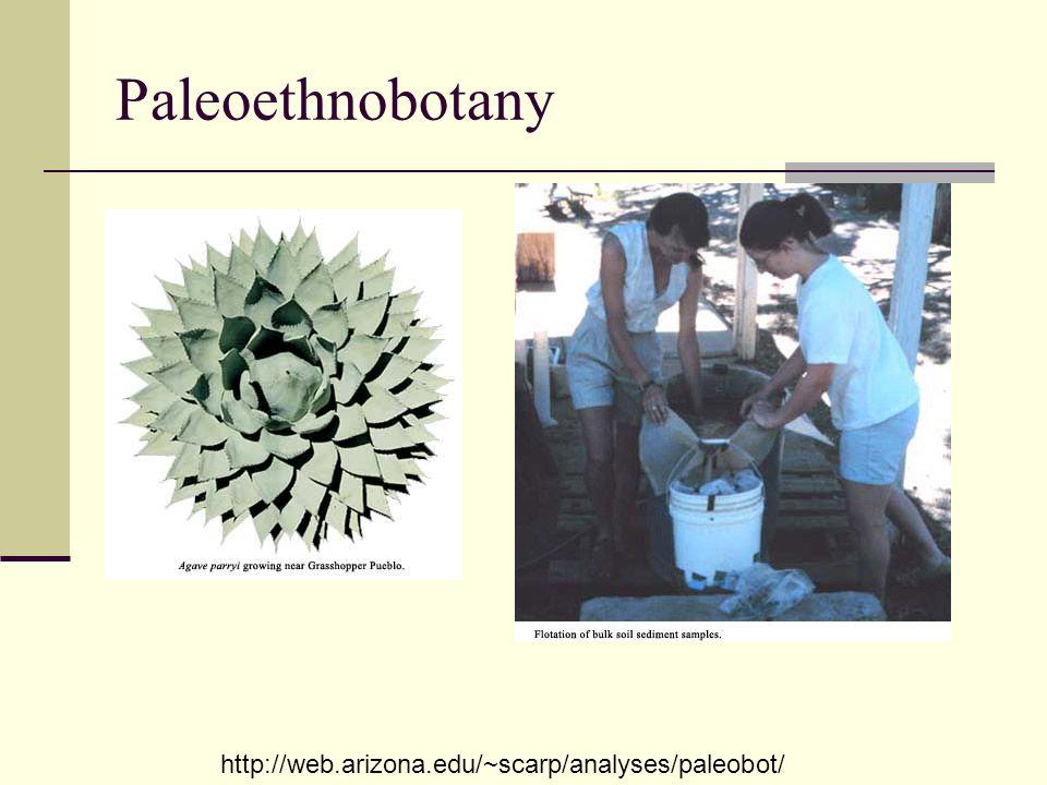 Paleoethnobotany http://web.arizona.edu/~scarp/analyses/paleobot/