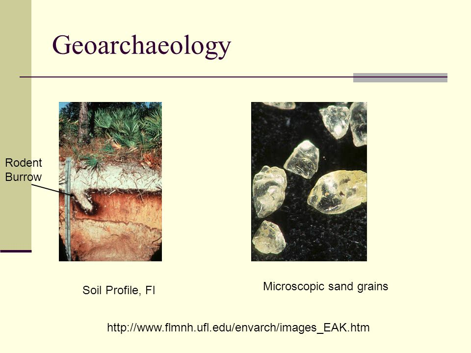 Geoarchaeology Rodent Burrow Microscopic sand grains Soil Profile, Fl