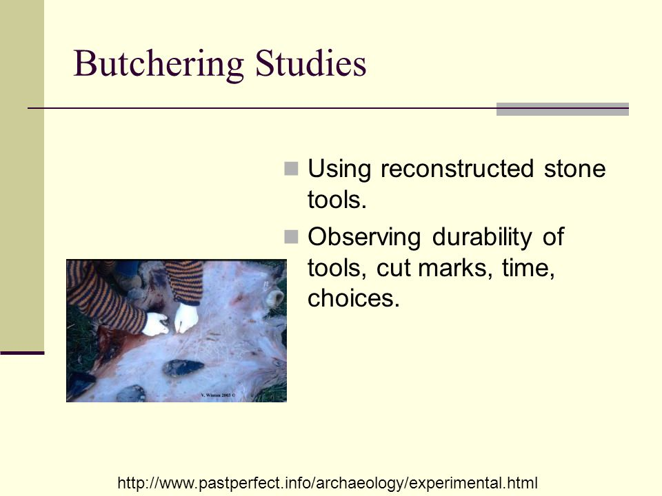 Butchering Studies Using reconstructed stone tools.