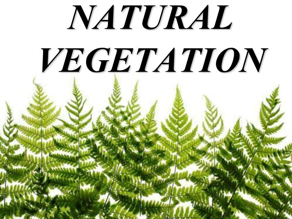 natural vegetation of india pdf