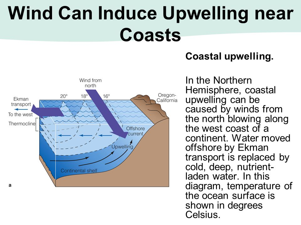Wind Can Induce Upwelling near Coasts