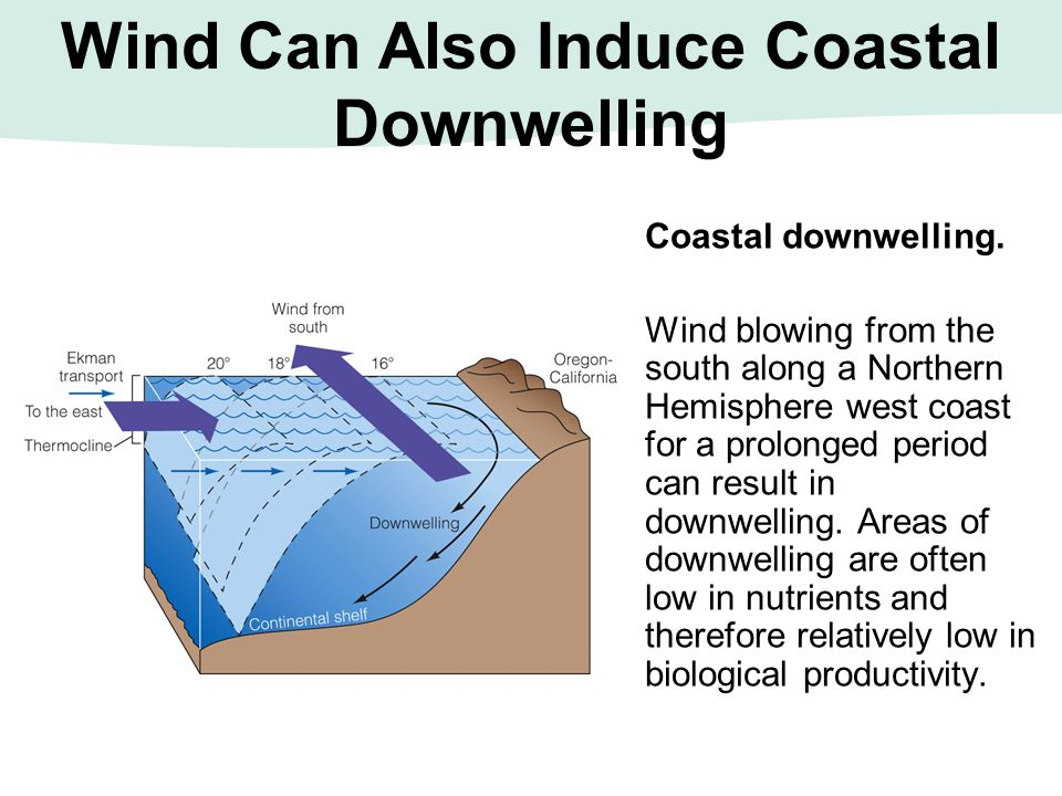Wind Can Also Induce Coastal Downwelling