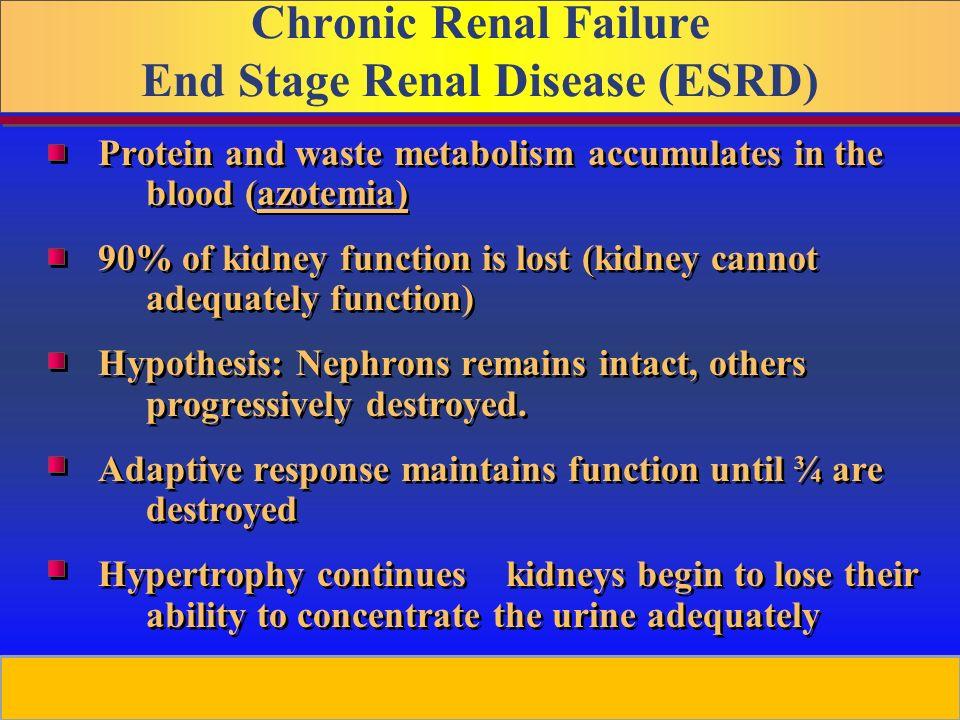 Chronic Kidney Disease - ppt video online download