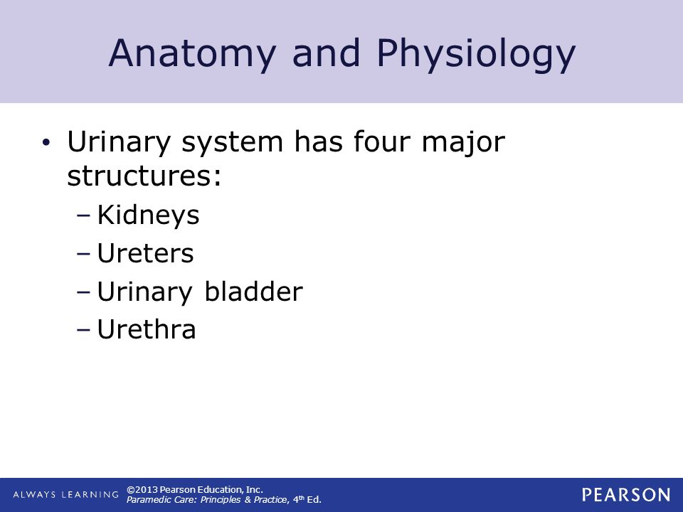 bladder physiology and anatomy pdf