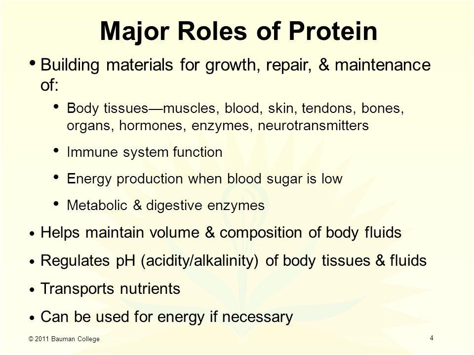 Bauman College Wellness Program Lean Protein And Clean