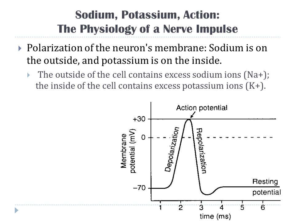 Sodium, Potassium, Action: The Physiology of a Nerve Impulse