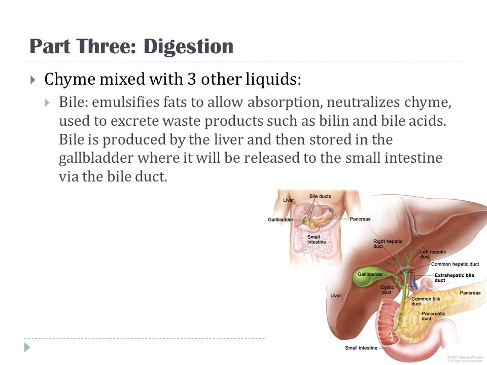 Part Three: Digestion Chyme mixed with 3 other liquids: